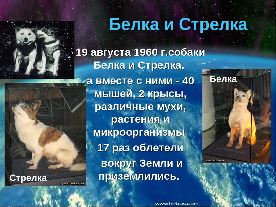 сути, космос картинки и информация любителей домашних