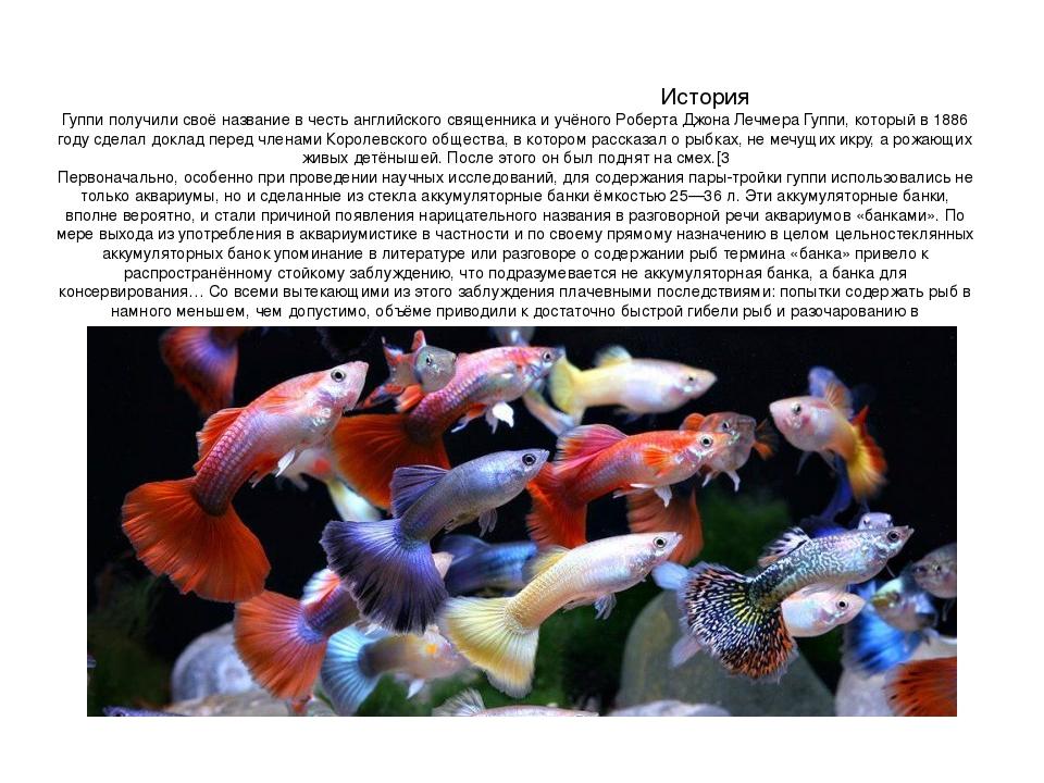 Гуппи рыбки содержание в домашних