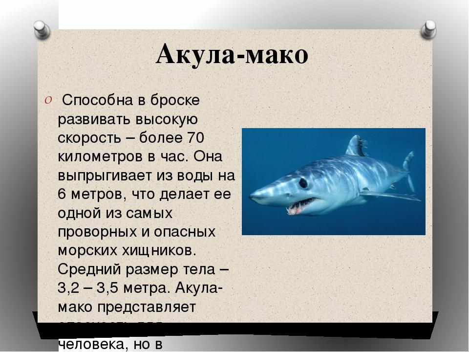 работа таких картинка акулы и описание равномерно наносить потом