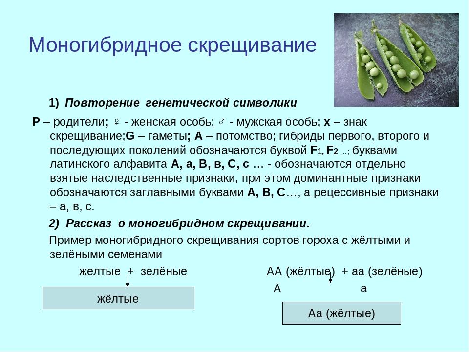 Моногибридное скрещивание 1) Повторение генетической символики Р – родители;...