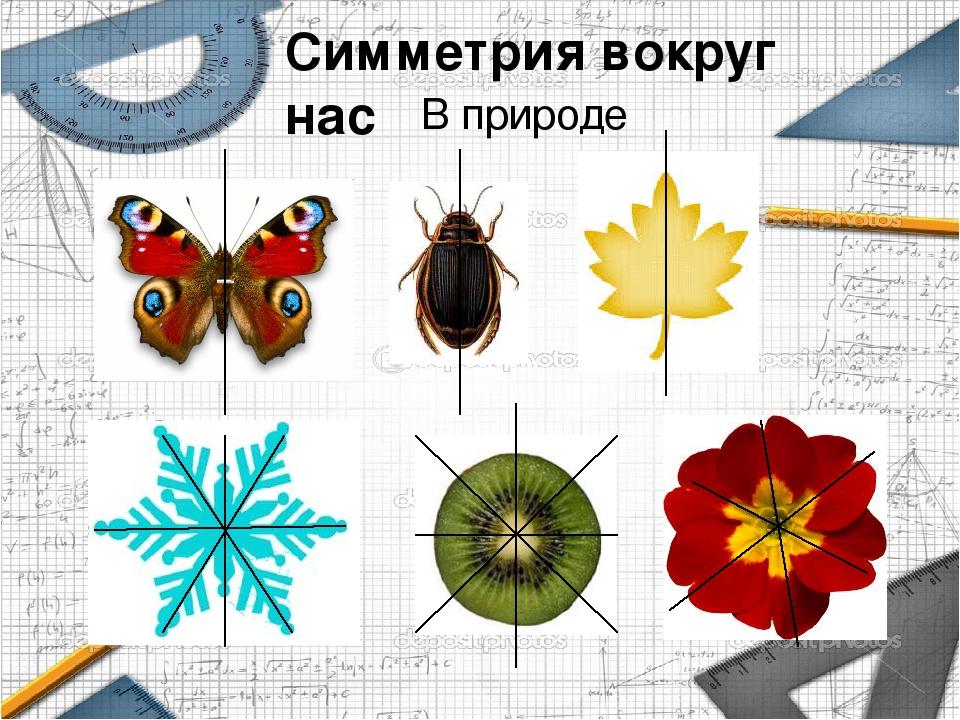 осевая симметрия в природе картинки примеры понятий, встречаемых теме