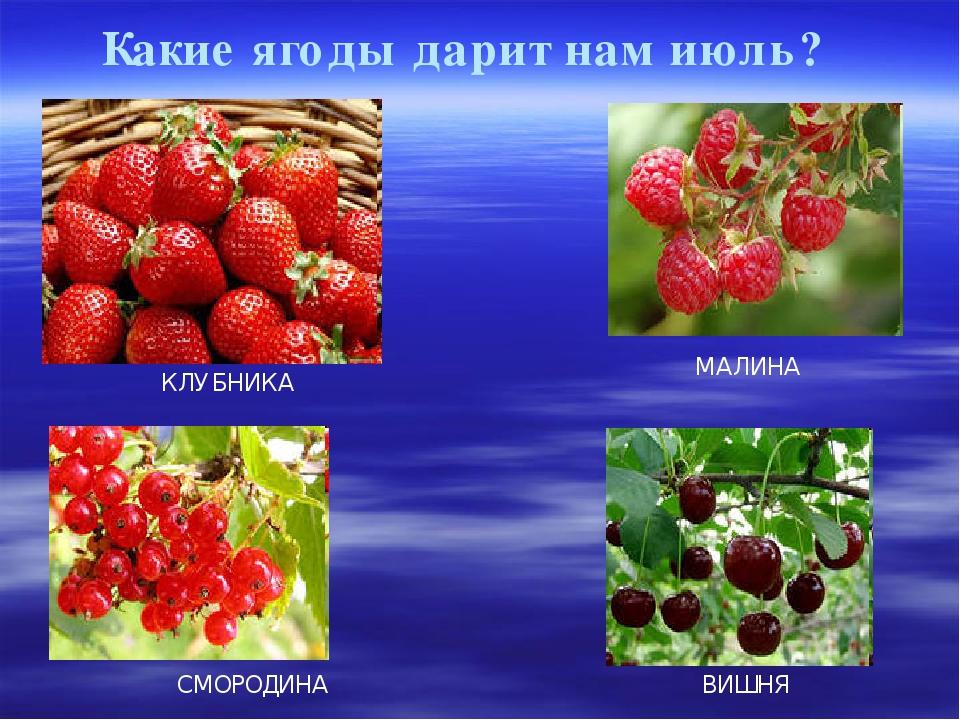 Какие ягоды дарит нам июль? КЛУБНИКА МАЛИНА СМОРОДИНА ВИШНЯ