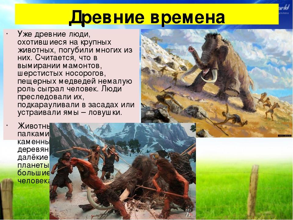 Древние времена Уже древние люди, охотившиеся на крупных животных, погубили м...