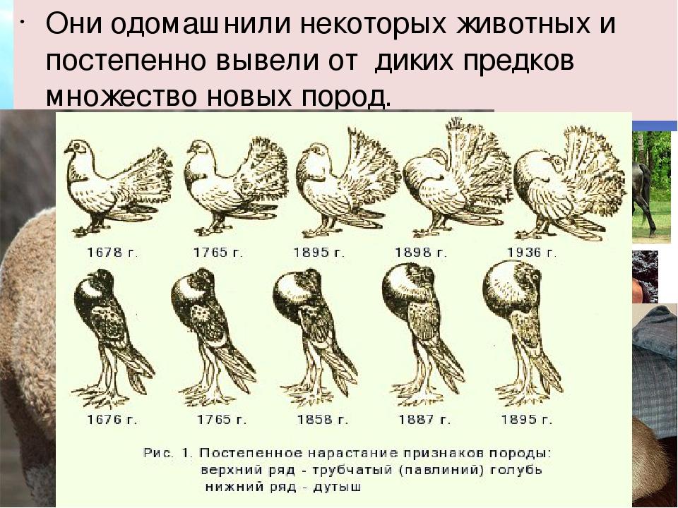 Они одомашнили некоторых животных и постепенно вывели от диких предков множе...