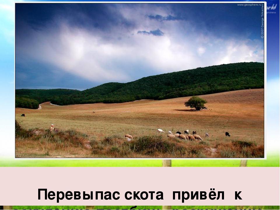 Перевыпас скота привёл к оскудению пастбищ, разрушению почвы, разрастанию пу...
