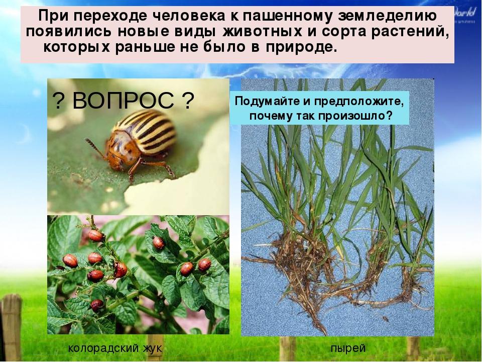 При переходе человека к пашенному земледелию появились новые виды животных и...
