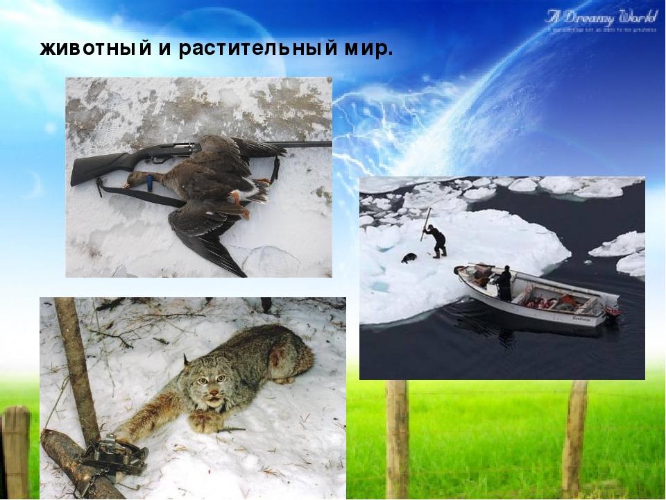 животный и растительный мир.