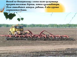 Весной по вспаханному с осени полю колхозники пускают железные бороны, потом