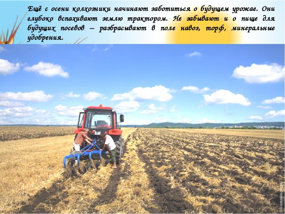 Ещё с осени колхозники начинают заботиться о будущем урожае. Они глубоко всп...