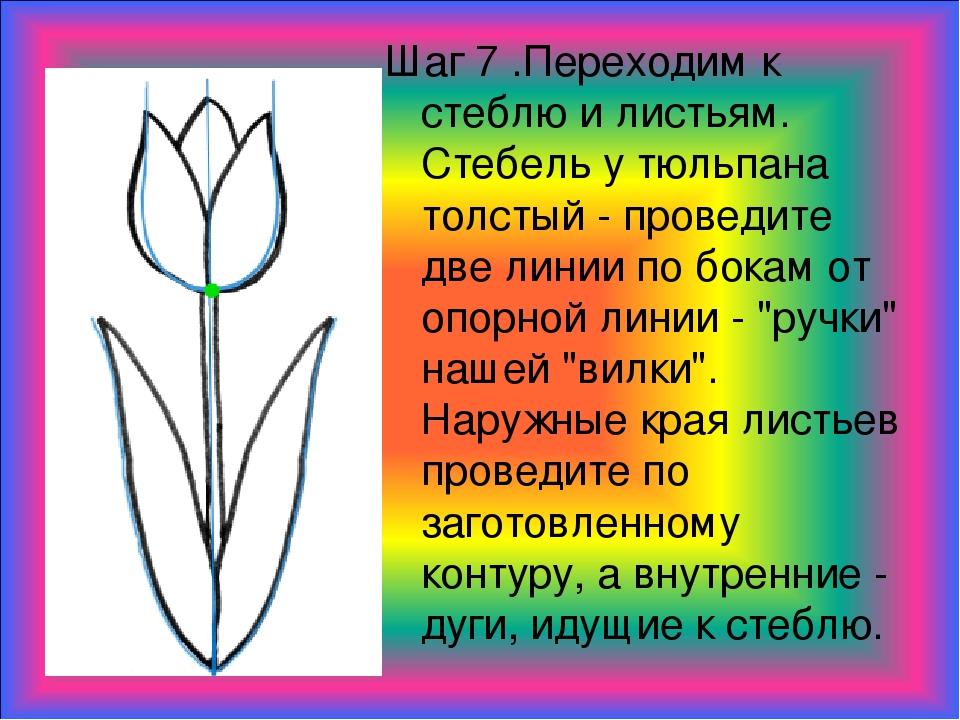 Шаг 7 .Переходим к стеблю и листьям. Стебель у тюльпана толстый - проведите д...