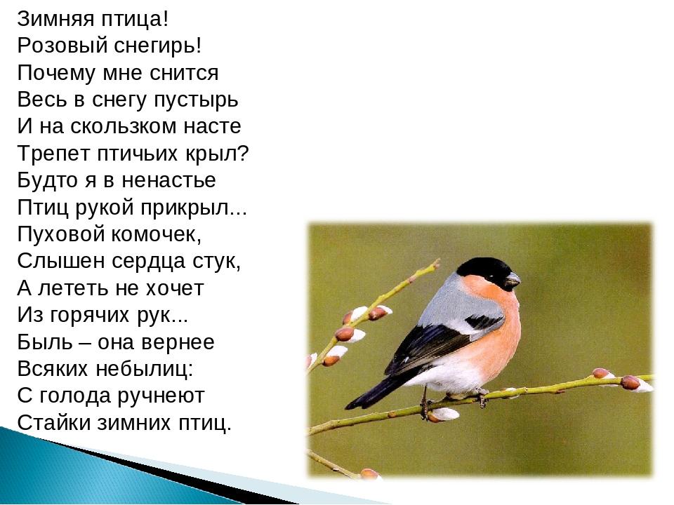 Зимняя птица! Розовый снегирь! Почему мне снится Весь в снегу пустырь И на ск...