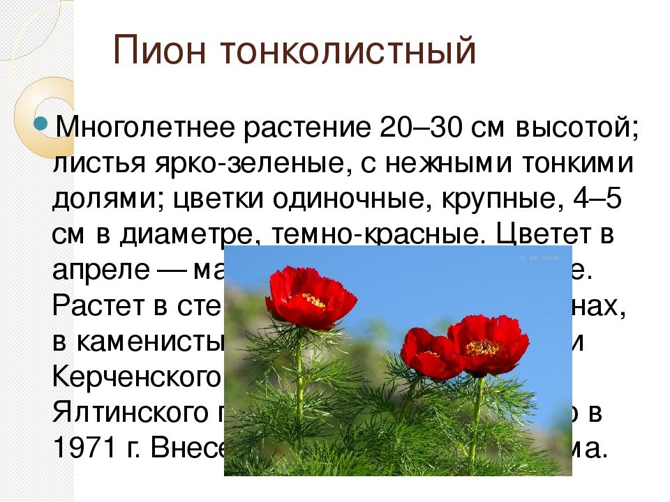 растения красной книги крыма фото и описание нам машины
