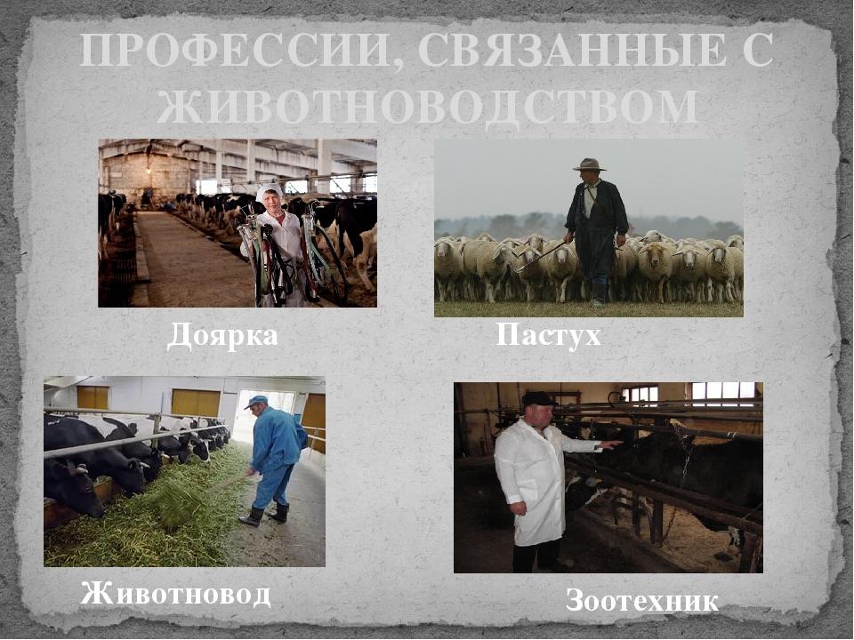 ПРОФЕССИИ, СВЯЗАННЫЕ С ЖИВОТНОВОДСТВОМ Доярка Пастух Животновод Зоотехник