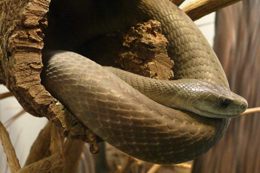 воздушность, картинки змей черная мамба выполнена стилизированных