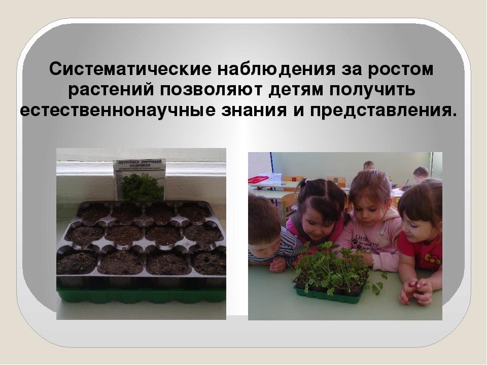 Систематические наблюдения за ростом растений позволяют детям получить естест...