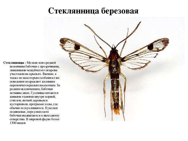 Ночные бабочки на ночь Берёзовая ул. путана по вызову Липовая аллея