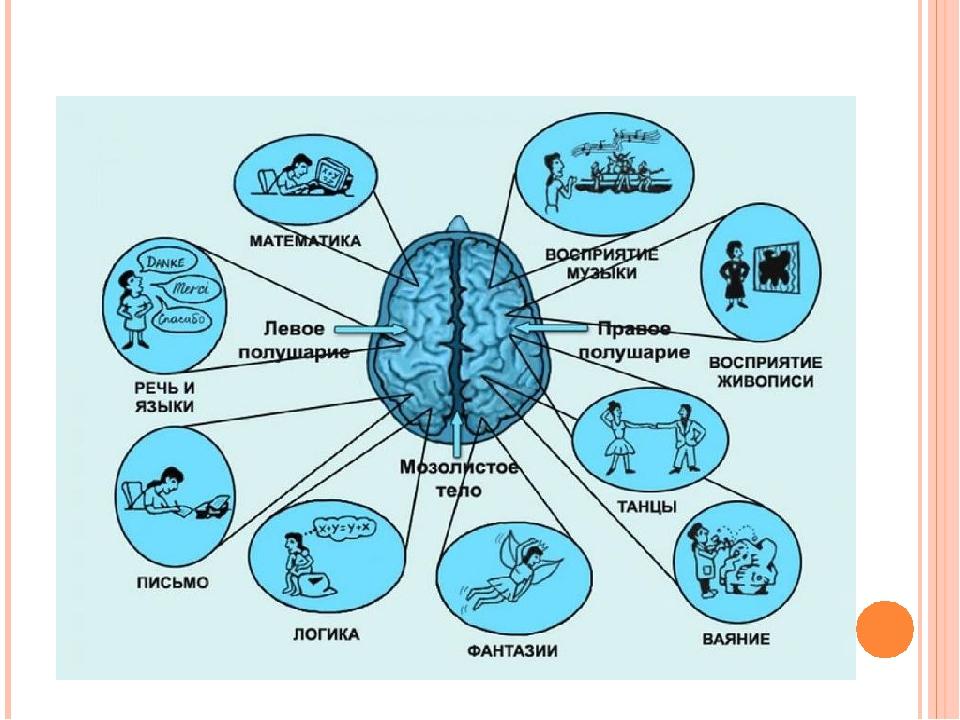 Основные функции больших полушарий головного мозга