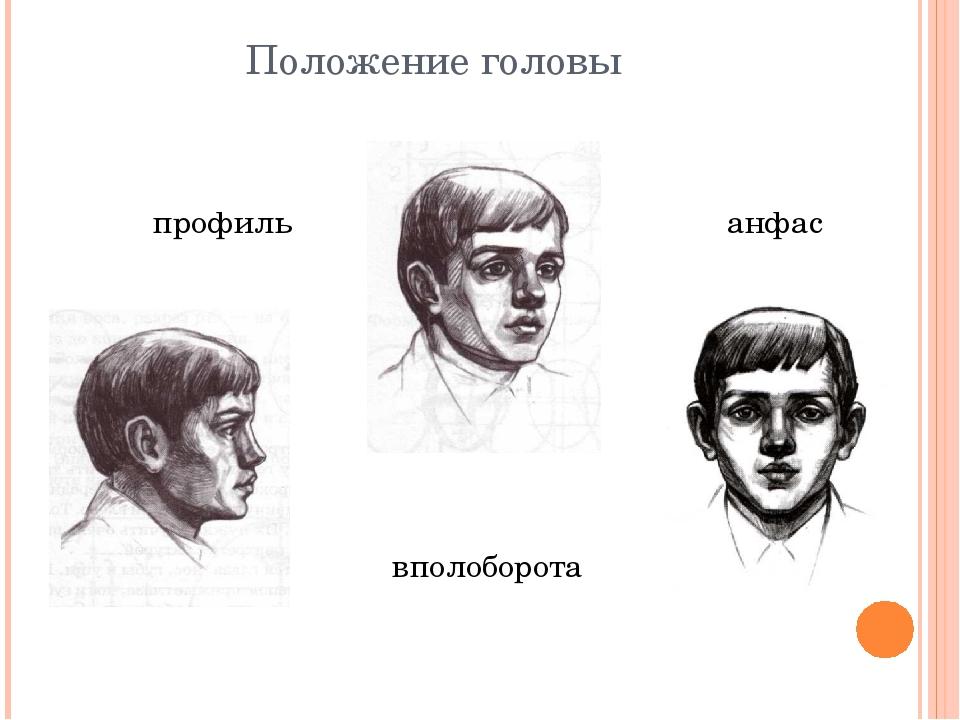 Положение головы профиль вполоборота анфас