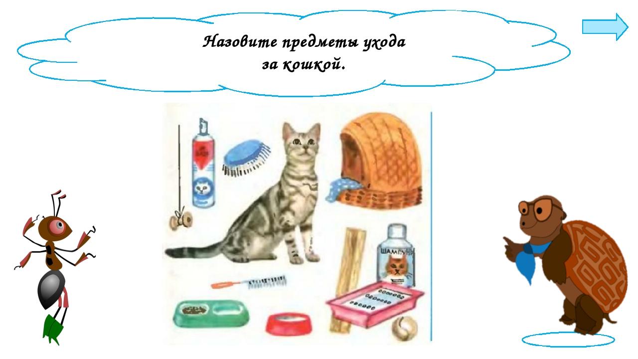 Назовите предметы ухода за кошкой.
