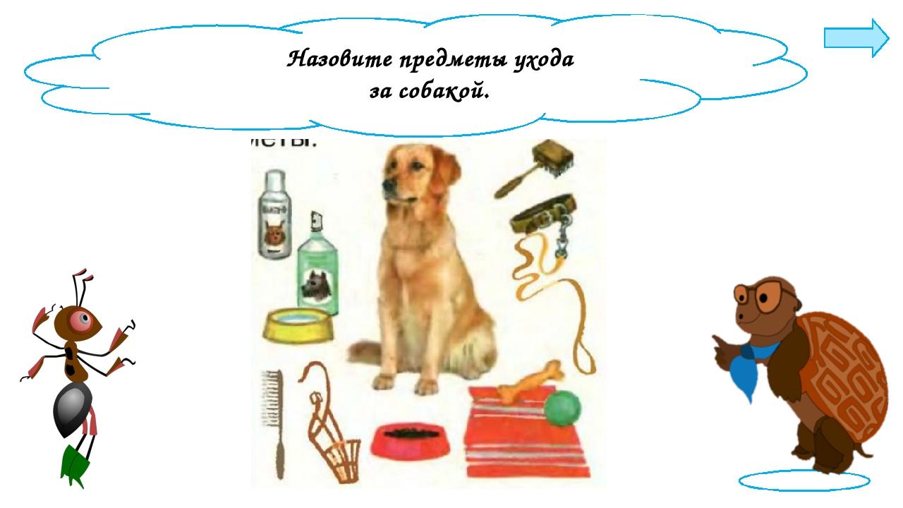 Назовите предметы ухода за собакой.