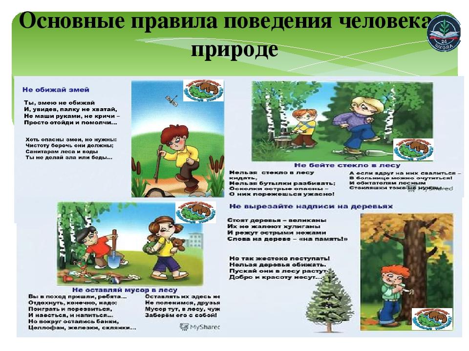 правила как вести себя в лесу с картинками можно применить пользой