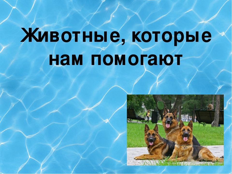 Животные, которые нам помогают