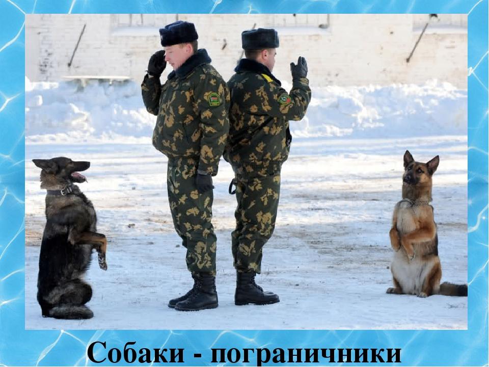 Собаки - пограничники