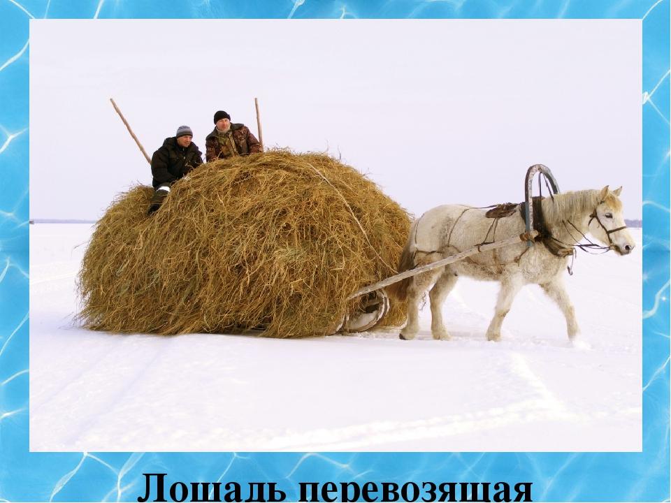 Лошадь перевозящая груз