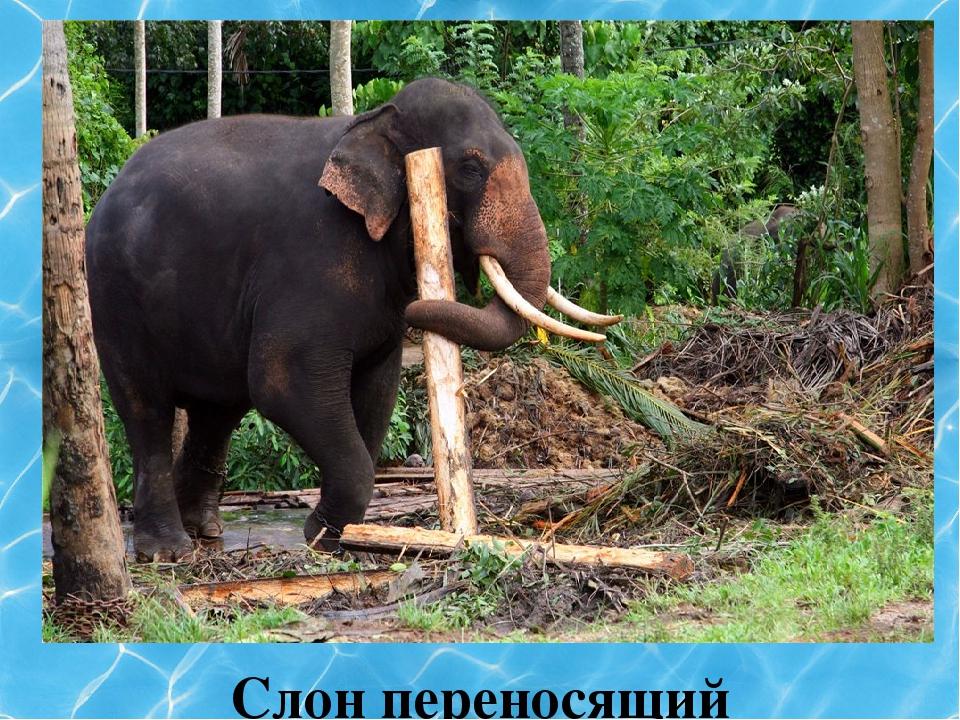 Слон переносящий бревно