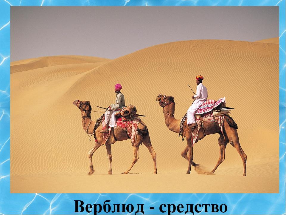 Верблюд - средство передвижения