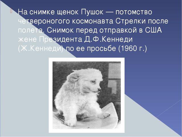 На снимке щенок Пушок — потомство четвероногого космонавта Стрелки после пол...