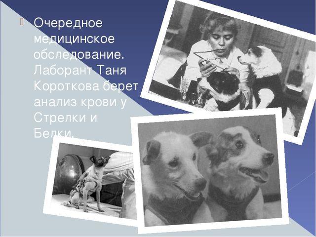 Очередное медицинское обследование. Лаборант Таня Короткова берет анализ кро...