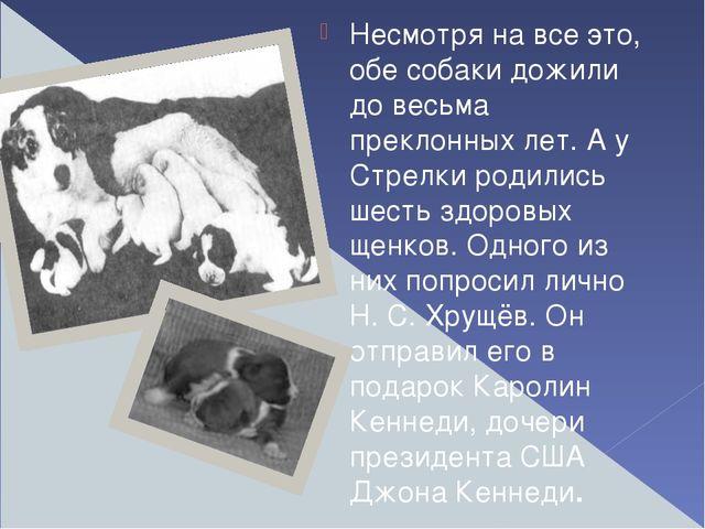 Несмотря на все это, обе собаки дожили до весьма преклонных лет. А у Стрелки...