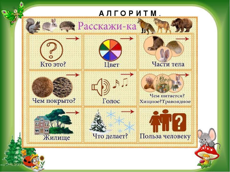 Доу картинка схема о животном