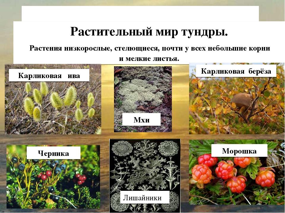 Сообщение фотосинтез растений любовь, как