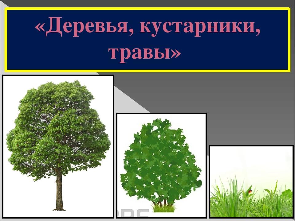 Деревья кустарники растения картинки