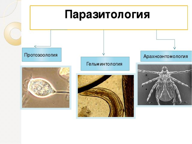 parasitology helminthology