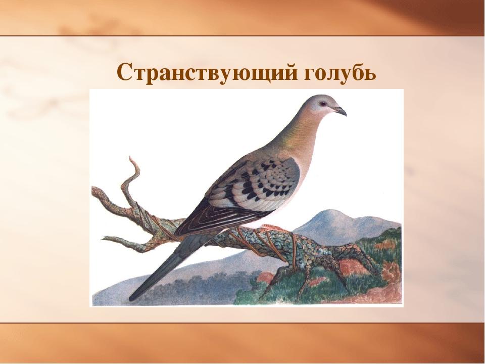 исчезнувшие животные и птицы в картинках что избранник фигуристки