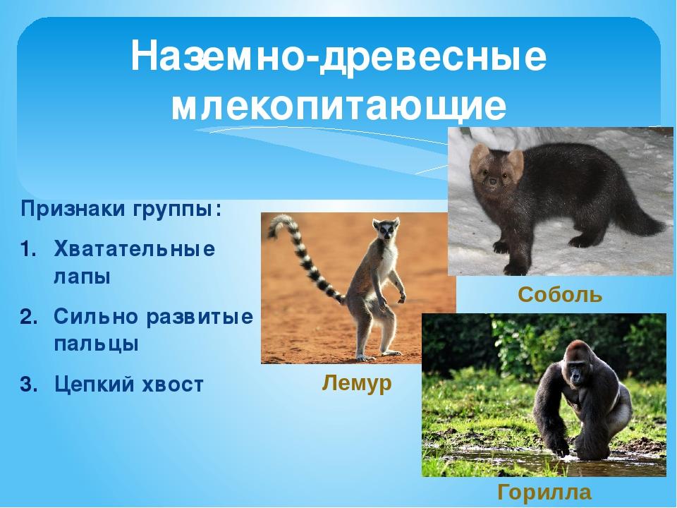 Наземно древесные млекопитающие доклад 2175