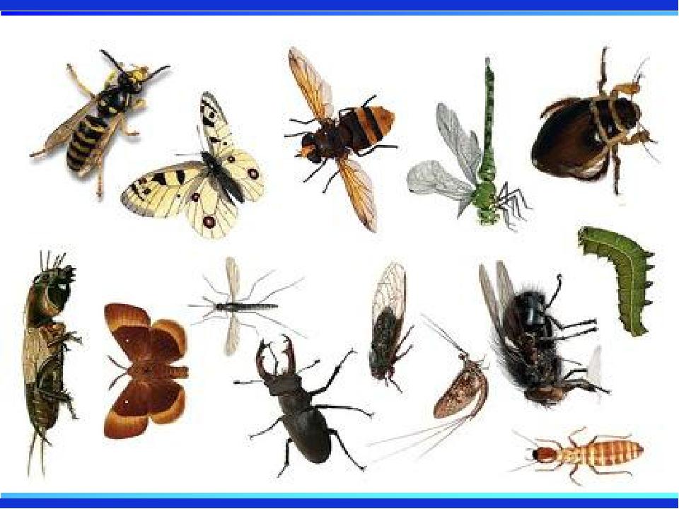 картинки много насекомых на одном листе расстоянии сильно отомстить