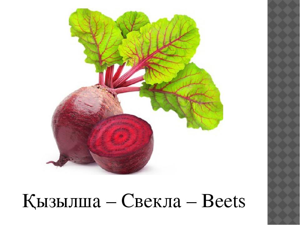 Қызылша – Свекла – Beets