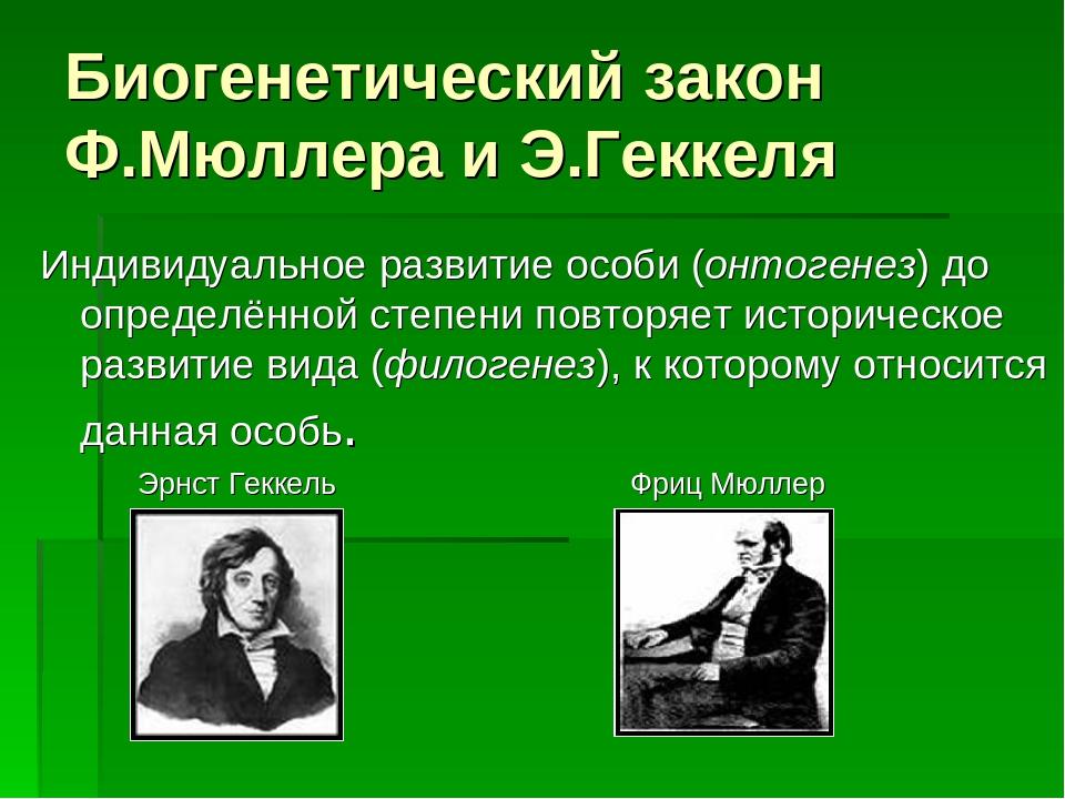 Биогенетический закон Ф.Мюллера и Э.Геккеля Индивидуальное развитие особи (он...