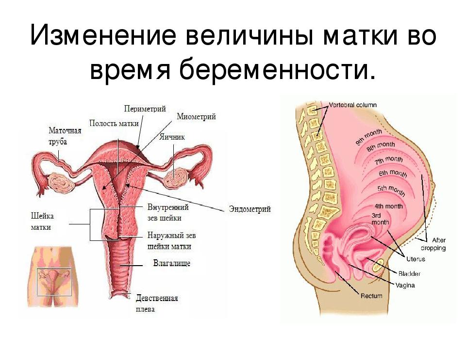 Гипертонус матки у беременной 74