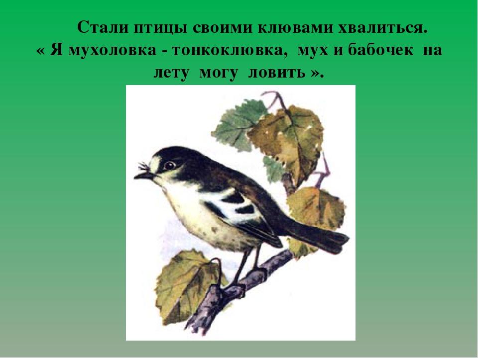 Стали птицы своими клювами хвалиться. « Я мухоловка - тонкоклювка, мух и баб...
