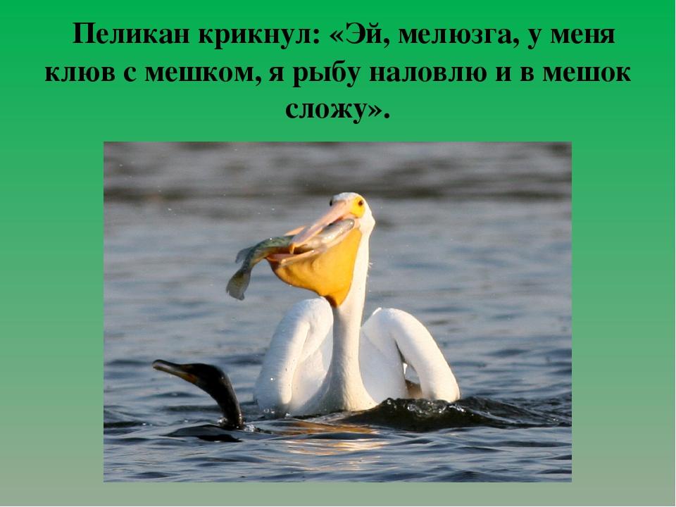 Пеликан крикнул: «Эй, мелюзга, у меня клюв с мешком, я рыбу наловлю и в мешо...