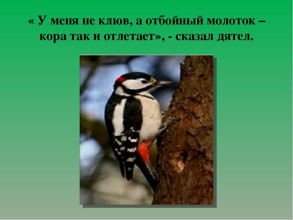 « У меня не клюв, а отбойный молоток – кора так и отлетает», - сказал дятел.
