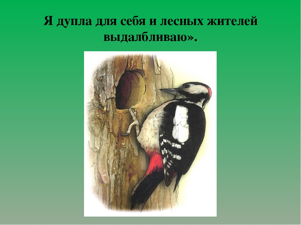 Я дупла для себя и лесных жителей выдалбливаю».