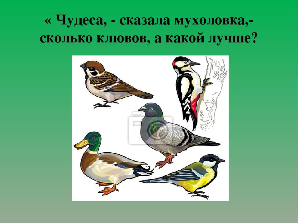« Чудеса, - сказала мухоловка,- сколько клювов, а какой лучше?