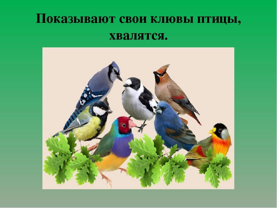 Показывают свои клювы птицы, хвалятся.
