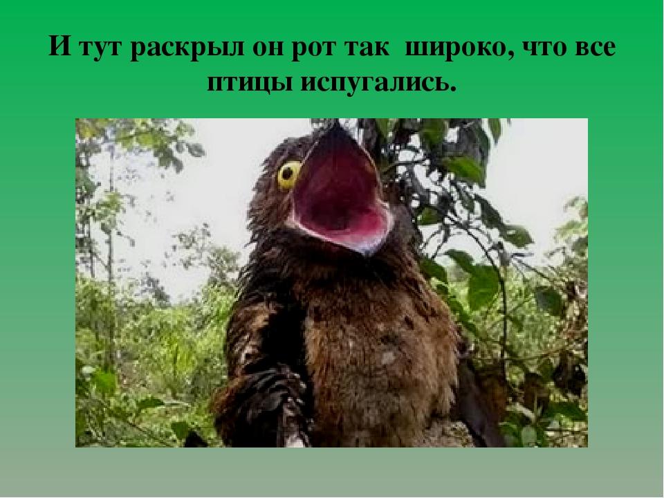 И тут раскрыл он рот так широко, что все птицы испугались.